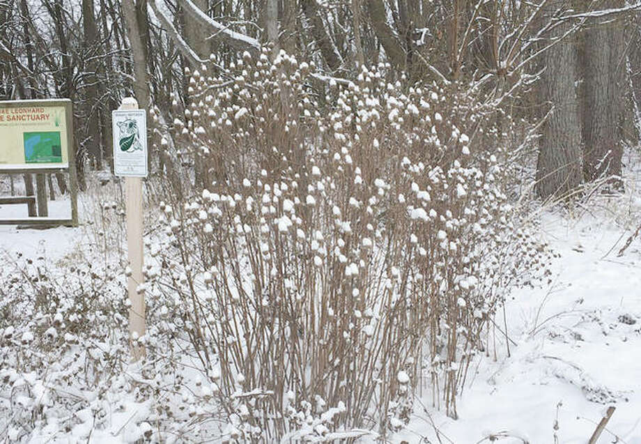 A snow-sprinkled Emma Leonard Sanctuary waits quietly for spring.