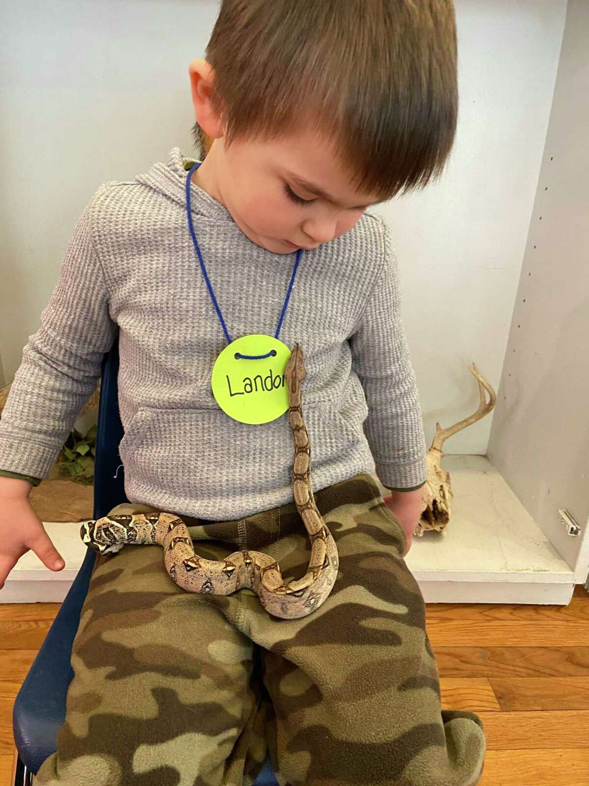 Landon Marchison, 3, from Ridgefield, watches as Indira, the new Colombian Red-Tailed Boa Constrictor, slithers on his lap at the Woodcock Nature Center on Feb. 17.