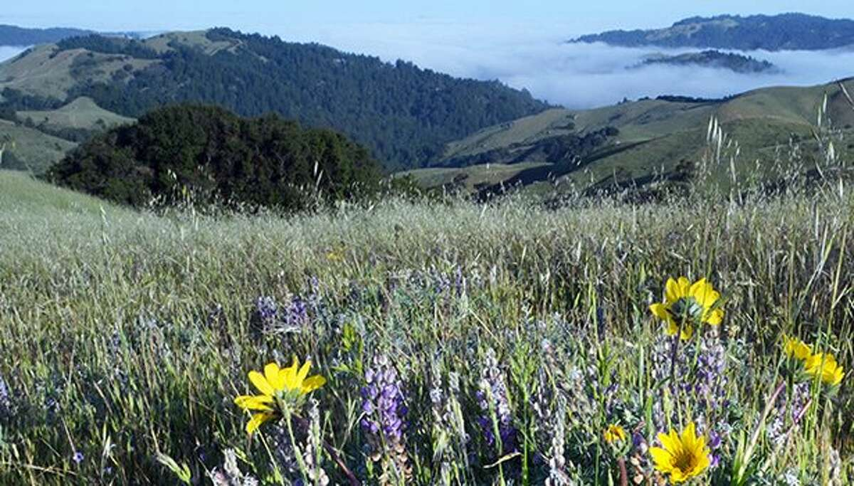 Loma Alta Preserve provide one of the fastest and most overlooked gateways from city to wildlands with spectacular views.