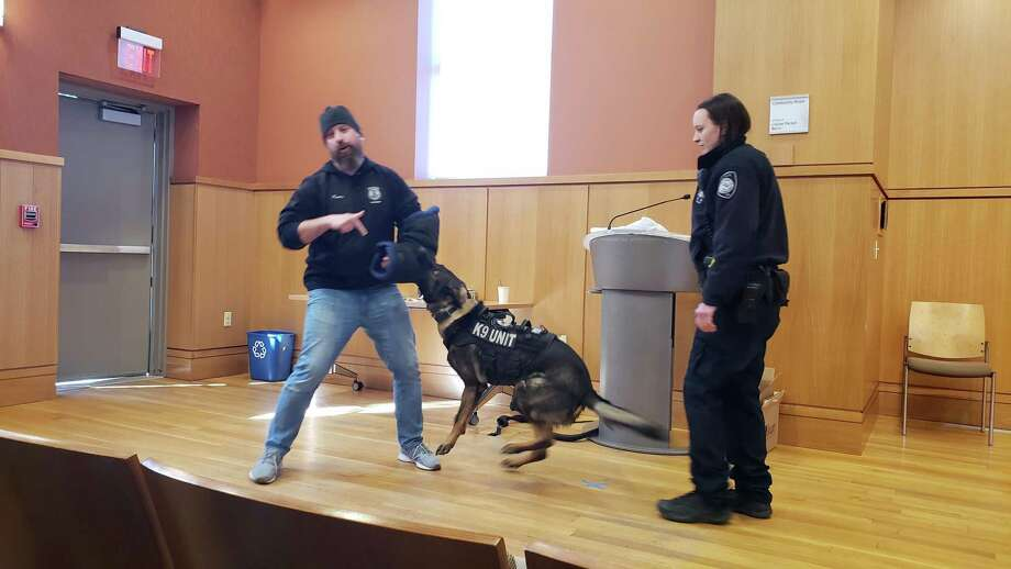 K9 Officer Logan Pavia with the Stamford Police Department taking part in a staged bite from Darien K9 Argo. Photo: Sandra Diamond Fox / Hearst Connecticut Media / Connecticut Post