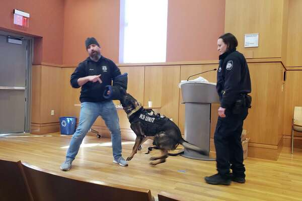 K9 Officer Logan Pavia with the Stamford Police Department taking part in a staged bite from Darien K9 Argo.