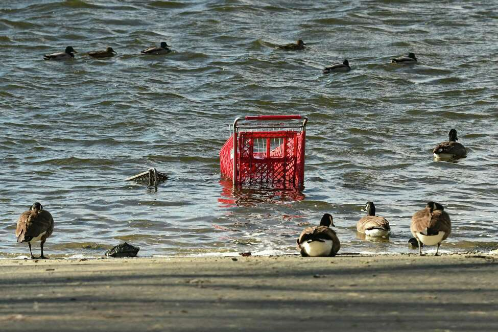 Ducks and geese are seen surrounding a couple of shopping carts submerged in the Hudson River at a boat launch on Wednesday, Feb. 19, 2020 in Troy, N.Y. (Lori Van Buren/Times Union)