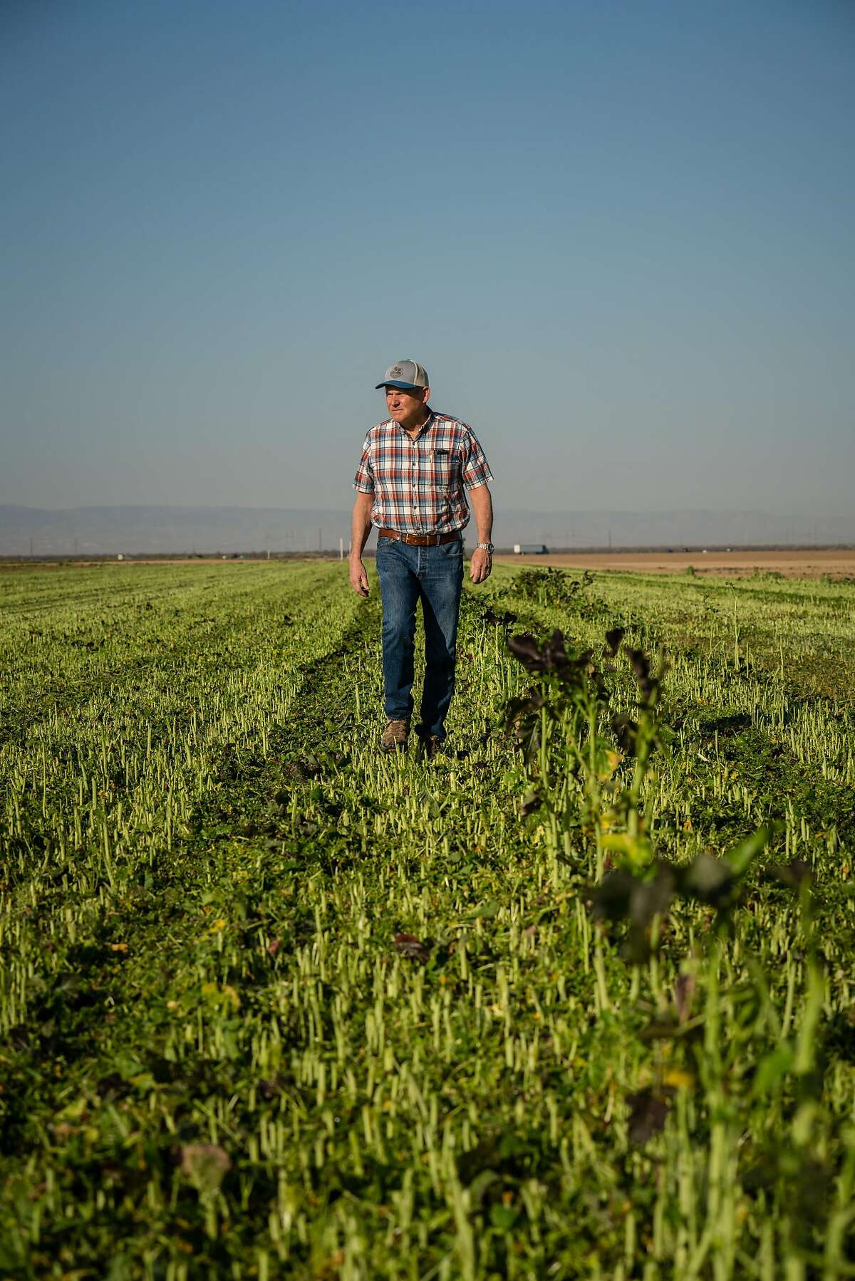 BUTTONWILLOW, CA--Farmer Tim Thompson farms a little over 1200 acres near Bakersfield. Tim has a difficult time getting water for his crops. Getting water for his crops is the main issue he wants to communicate to President Trump.