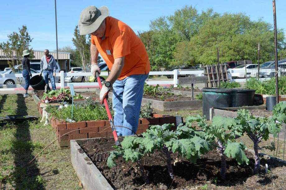Ralph Fuller tends to vegetables in the Ft. Bend County Master Gardeners' Demonstration Gardens in Rosenberg, TX on Wednesday, March 21, 2018. Photo: Craig Moseley