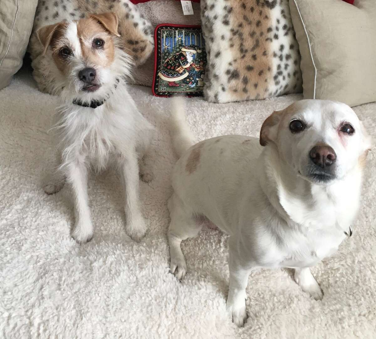 Times Union editor Susan Mehalick shares this picture of her doggies Misha, left, and Maggie.