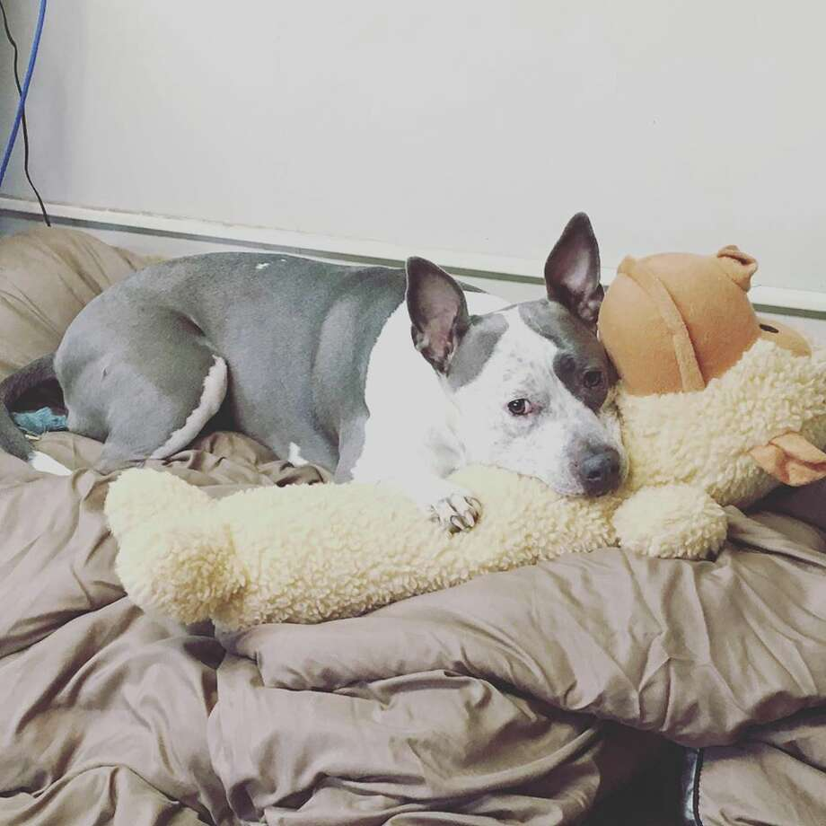 Diamond has been living at Adopt-A-Dog in Armonk, New York for about a year and is looking to be adopted by a loving family. Photo: Adopt-A-Dog