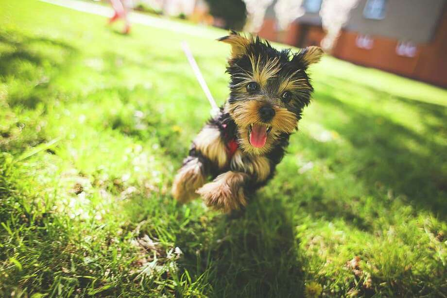 Owners have options when it comes to being Earth-friendly with regards to their pets. Photo: Texas A&M University