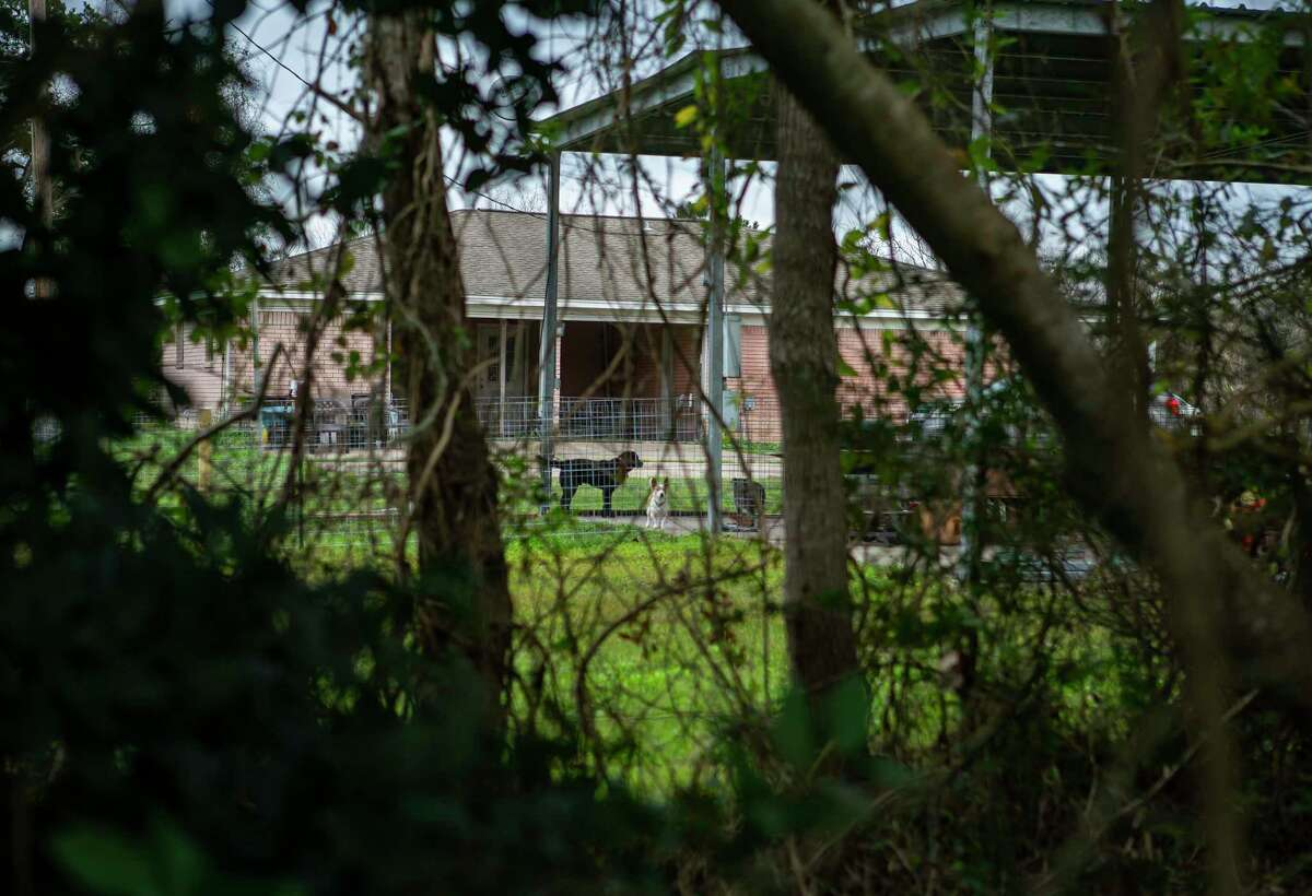 Dogs can be seen in a fenced enclosure next to a home where officials believe Christine Rollins was killed by wild hogs late last year, Thursday, Jan. 30, 2020, in Anahuac.