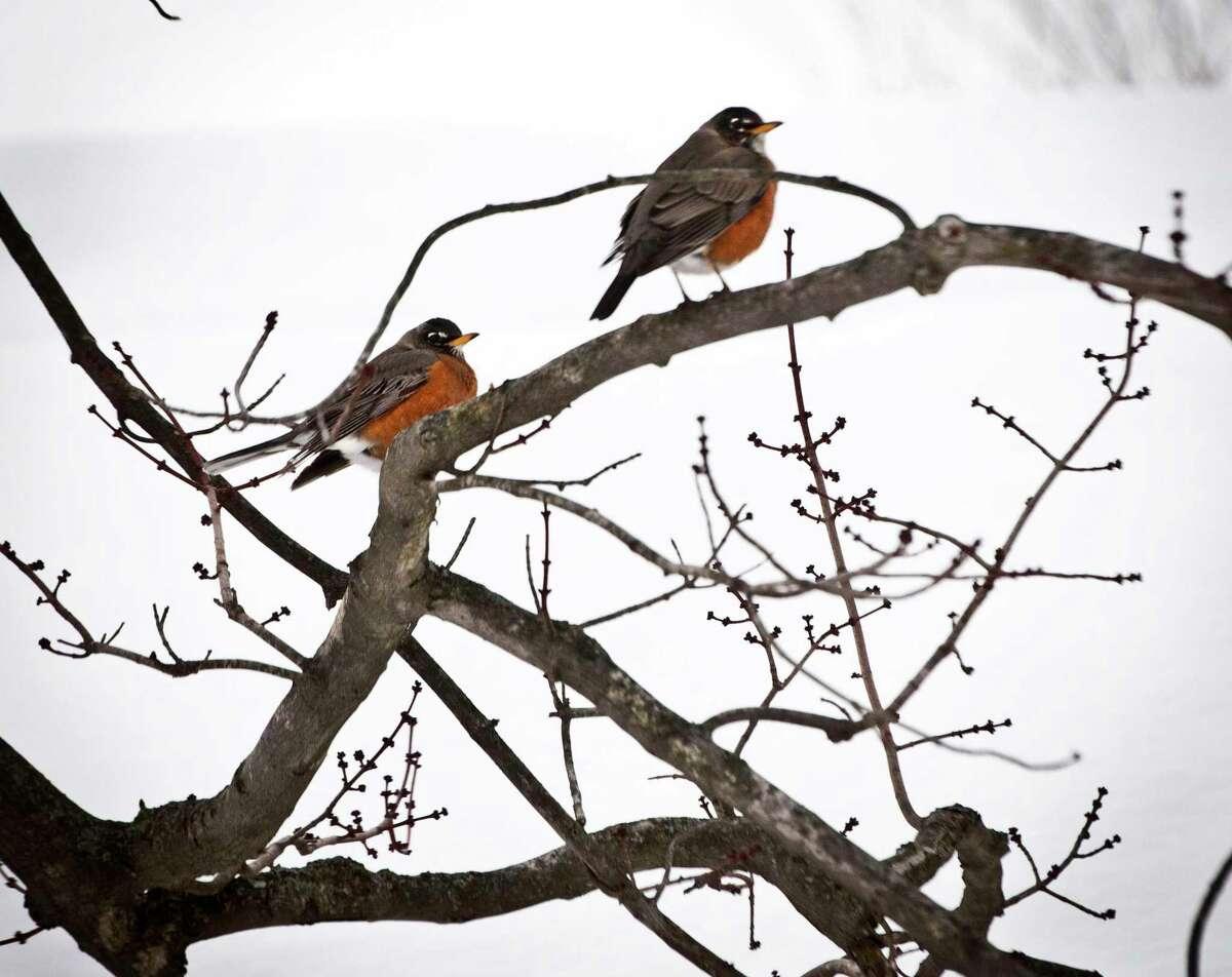 (Melanie Stengel - New Haven Register) ¬ Robins returning to New Haven 2/16.