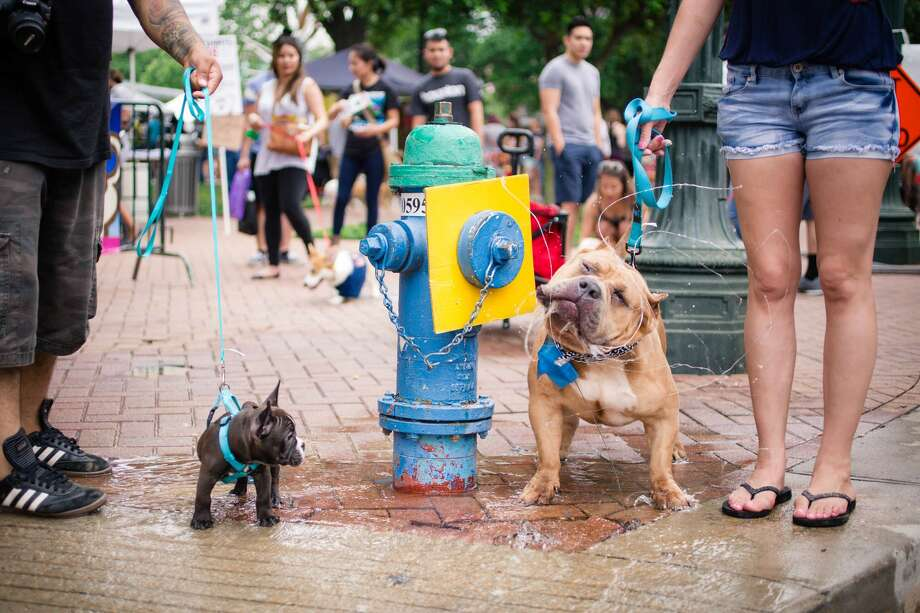 """The 10th annual """"Puppies for Breakfast"""" is an outdoor festival featuring more than 60 vendors and artists, food trucks, live music and more. Photo: Courtesy Puppies For Breakfast"""