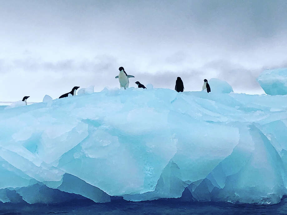 Adelie penguins chill out on an iceberg in Antarctica. Photo: Washington Post Photo By Andrea Sachs. / The Washington Post