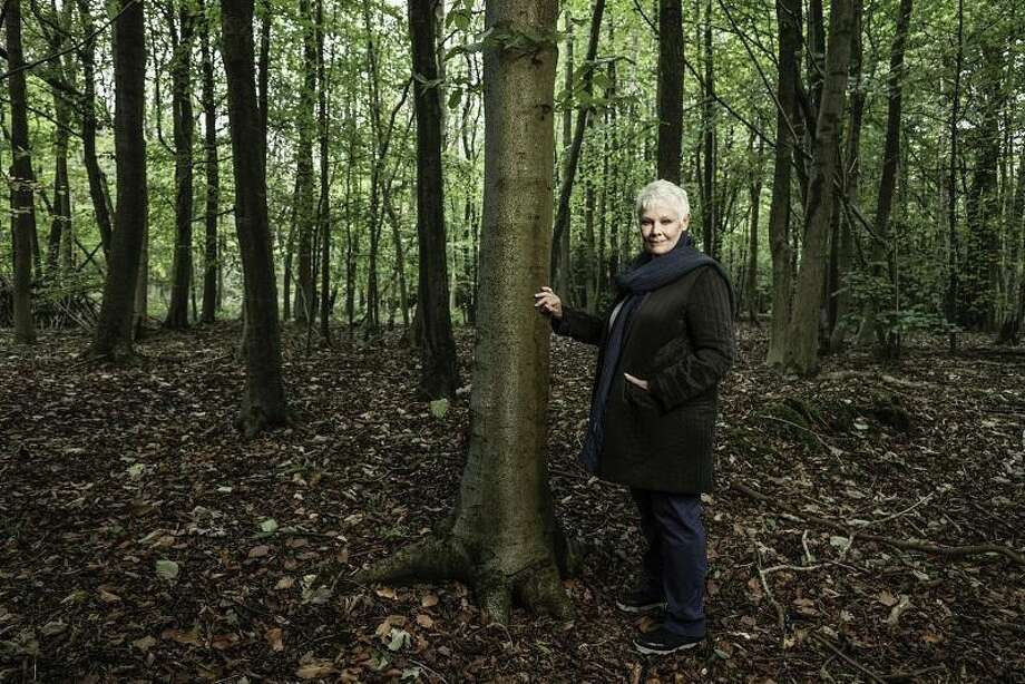 "The Greenwich Tree Conservancy and Stamford's Avon Theatre are co-hosting a screening of the documentary ""Judi Dench: My Passion for Trees"" at 7:30 p.m. March 4 with a post-film Q&A with New York Botanical Garden's Todd A. Forrest. The Avon Theatre Film Center is 272 Bedford St., Stamford. Tickets are $14.50 non-members; $11 students, seniors; $9 members; free Carte Blanche members. Call 203-967-3660 or visit avontheatre.org for info. Photo: Contributed /"