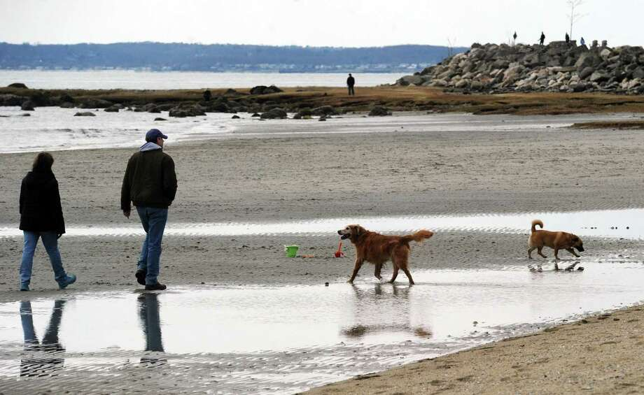 Dogs on the beach at Greenwich Point, Saturday, March 26, 2016. Photo: File / Hearst Connecticut Media / Greenwich Time