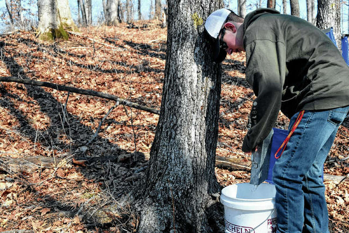 Jason Timmons, 15, of Jacksonville helps collect tree sap Saturday during a maple syrup-making demonstration in Murrayville. Pat and Barb Ward have been making syrup for more than a decade and open their home to visitors each season to show how sap is turned into syrup.
