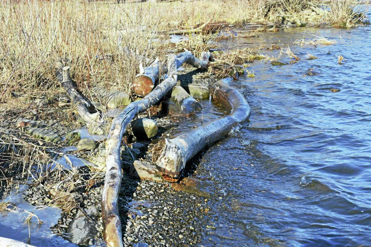 Driftwood and other detritus are seen at Haddam Meadows State Park.