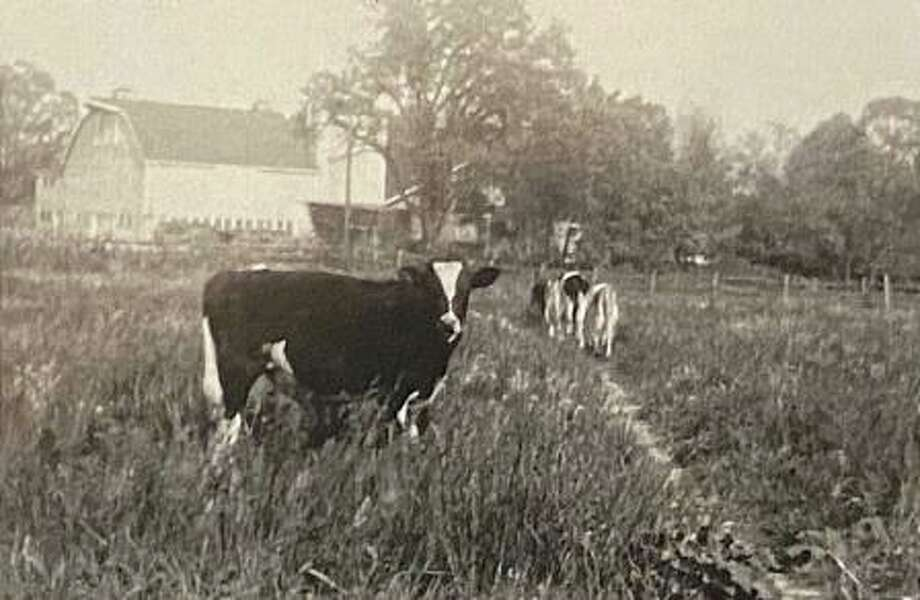 Lesh Farm, circa 1948. Wilma Shaw Deicas, a lifelong resident of New Canaan shared memories about growing up on her family's dairy farm on Tuesday, March 10, 2020, at 11 a.m. at the New Canaan Museum and Historical Society. Photo: Wilma Shaw Deicas / Contributed Photo
