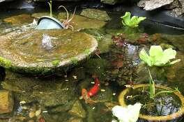 The property has a koi pond.