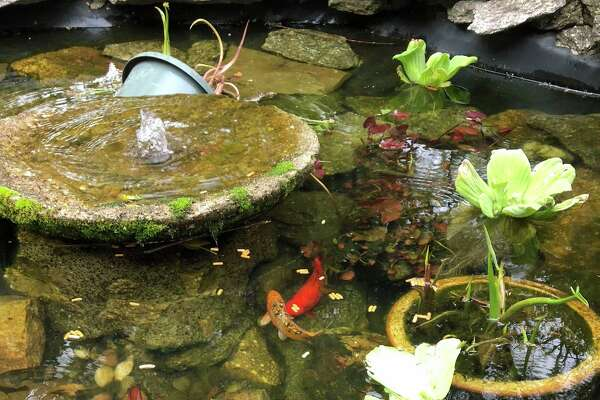 The property has a koi pond.
