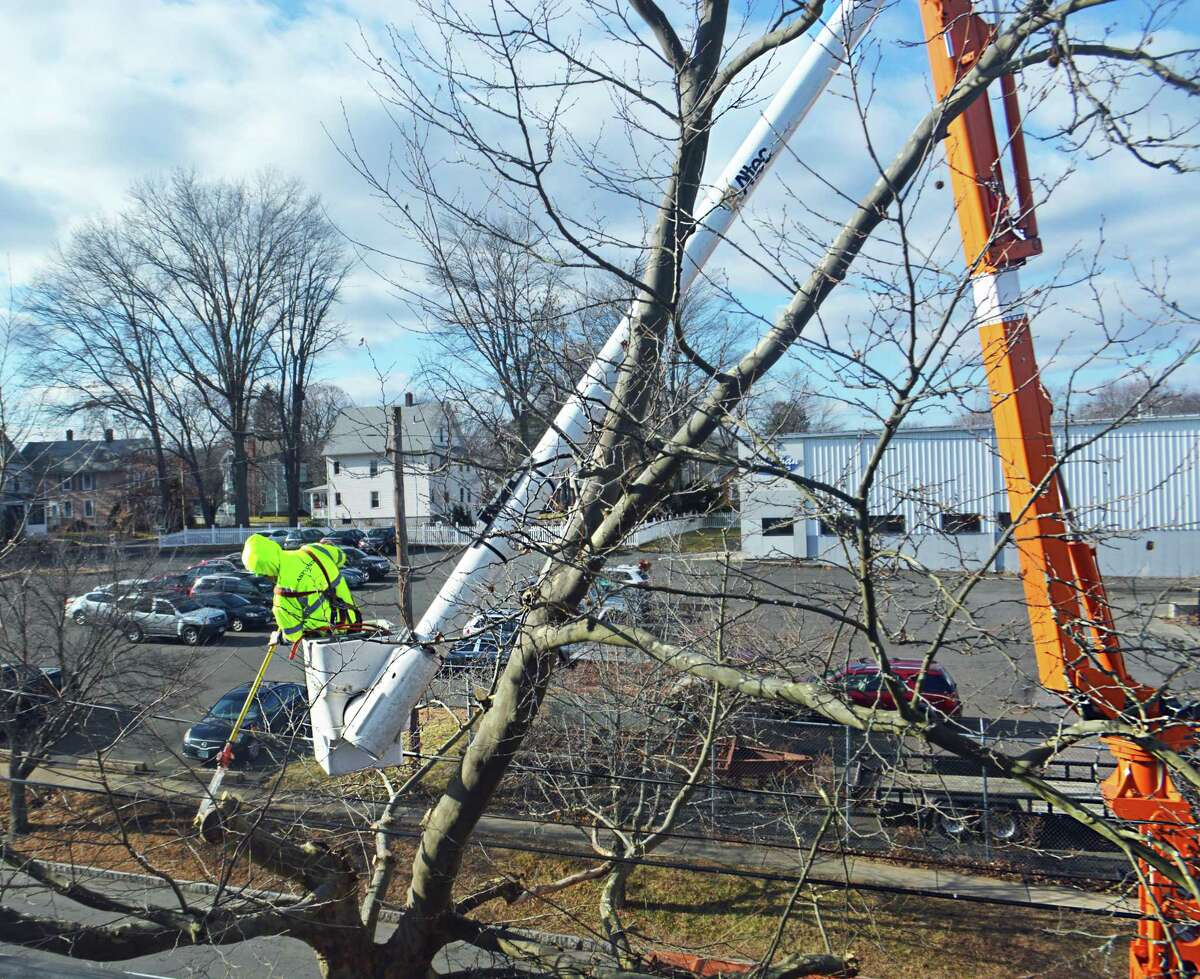 Eversource has announced a $83 million tree-trimming program to deal with