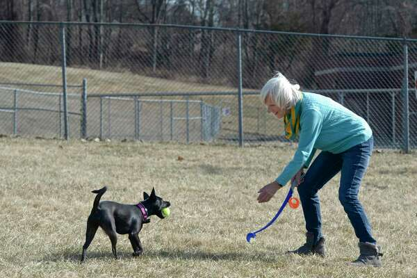 Allie returns with a tossed tennis ball to owner Pam Chapman at the new Margerie Reservoir dog park in Danbury, Conn. Monday, February 24, 2020.