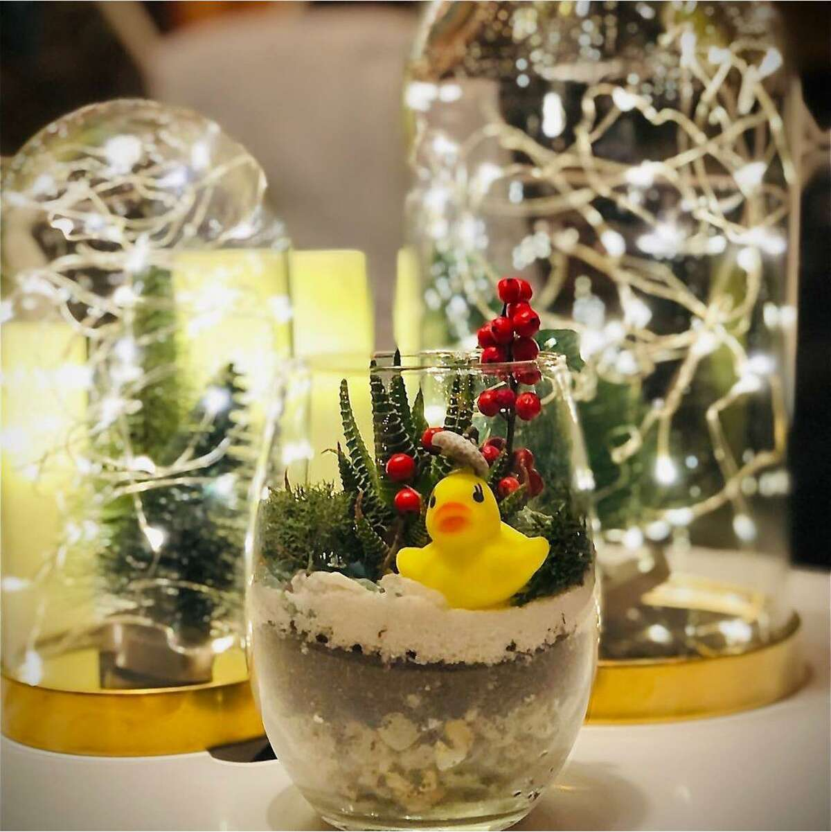Indoor container gardening is all the rage recently, said PlantHer owner Jillian Shea of Middletown. Each can be decorated in most any type of vessel.