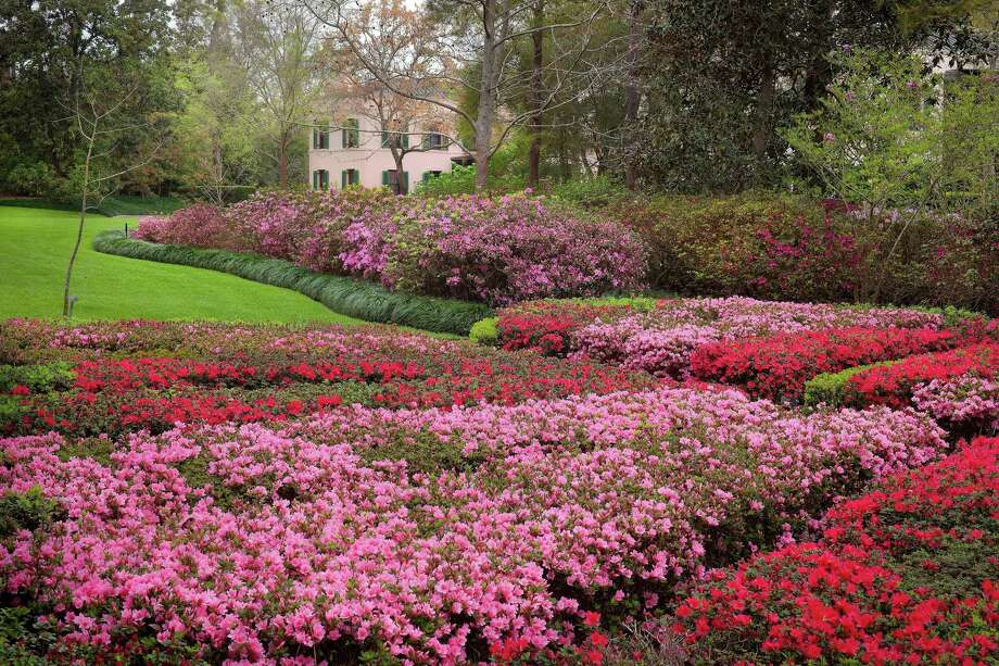 Bayou Bend, with its 14 acre-garden awash in spring blossoms, is always a popular stop along the Azalea Trail Home and Garden Tour. Photo: Rick Gardner / Rick Gardner