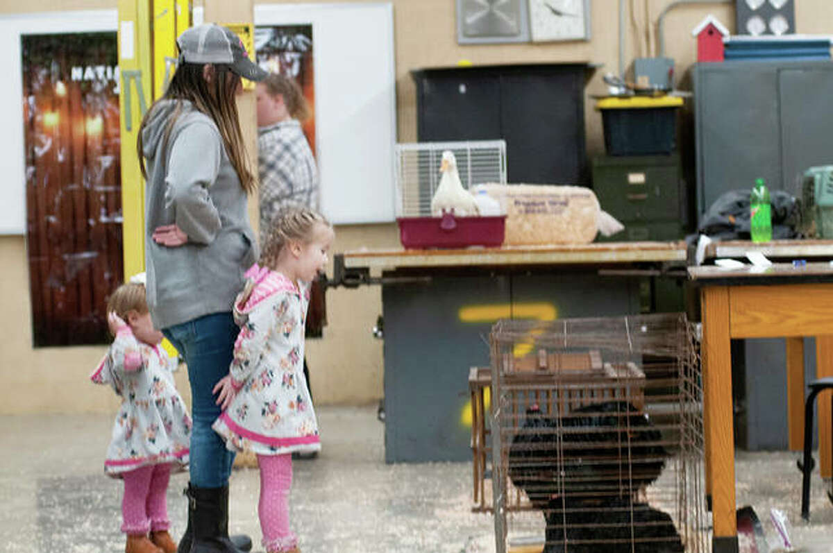 Preschoolers from surrounding areas visited Jacksonville High School Tuesday. The petting zoo was put on by the JHS' FFA Jacksonville.