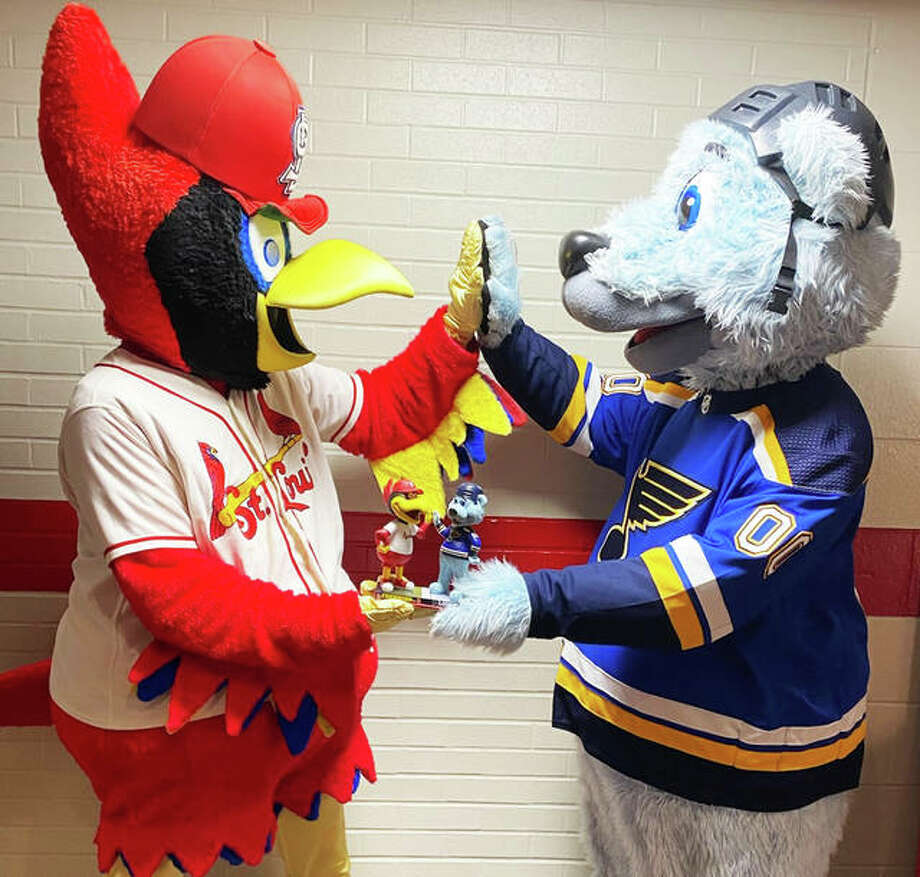 """Over the weekend, St. Louis Cardinals' Fredbird and St. Louis Blues' Louie got together and received their dual bobblehead. """"They both loved it!"""" exclaimed the National Bobblehead Hall of Fame and Museum's Phil Sklar, co-founder and chief executive officer of the Milwaukee, Wisconsin-based organization. Photo: Photo Credit The National Bobblehead Hall Of Fame And Museum"""