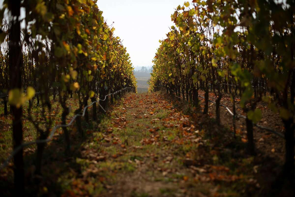 As part of The Gold Ridge Estate Tour & Tasting guests can stroll through the rows of The Pivot Estate Vineyard at Littorai Wines in Sebastopol, California. November 14, 2018.