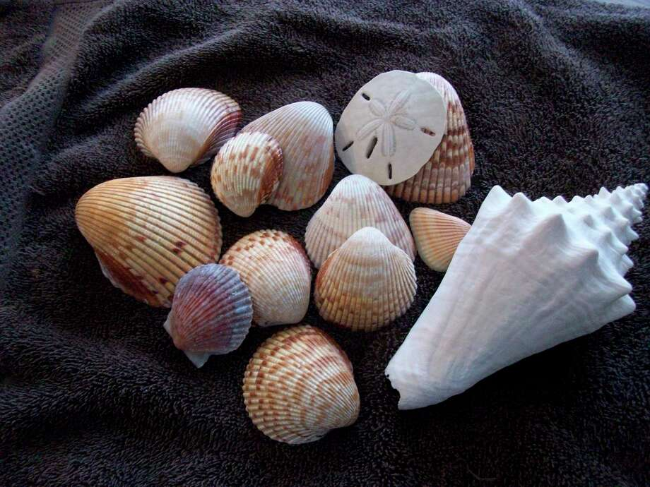 """Ann Morrow Lindberg refers to seashells as """"gifts from the sea"""", they could be found on daily beach walks on the Golf of Mexico.(Courtesy photo/Roxanne Rowley)"""