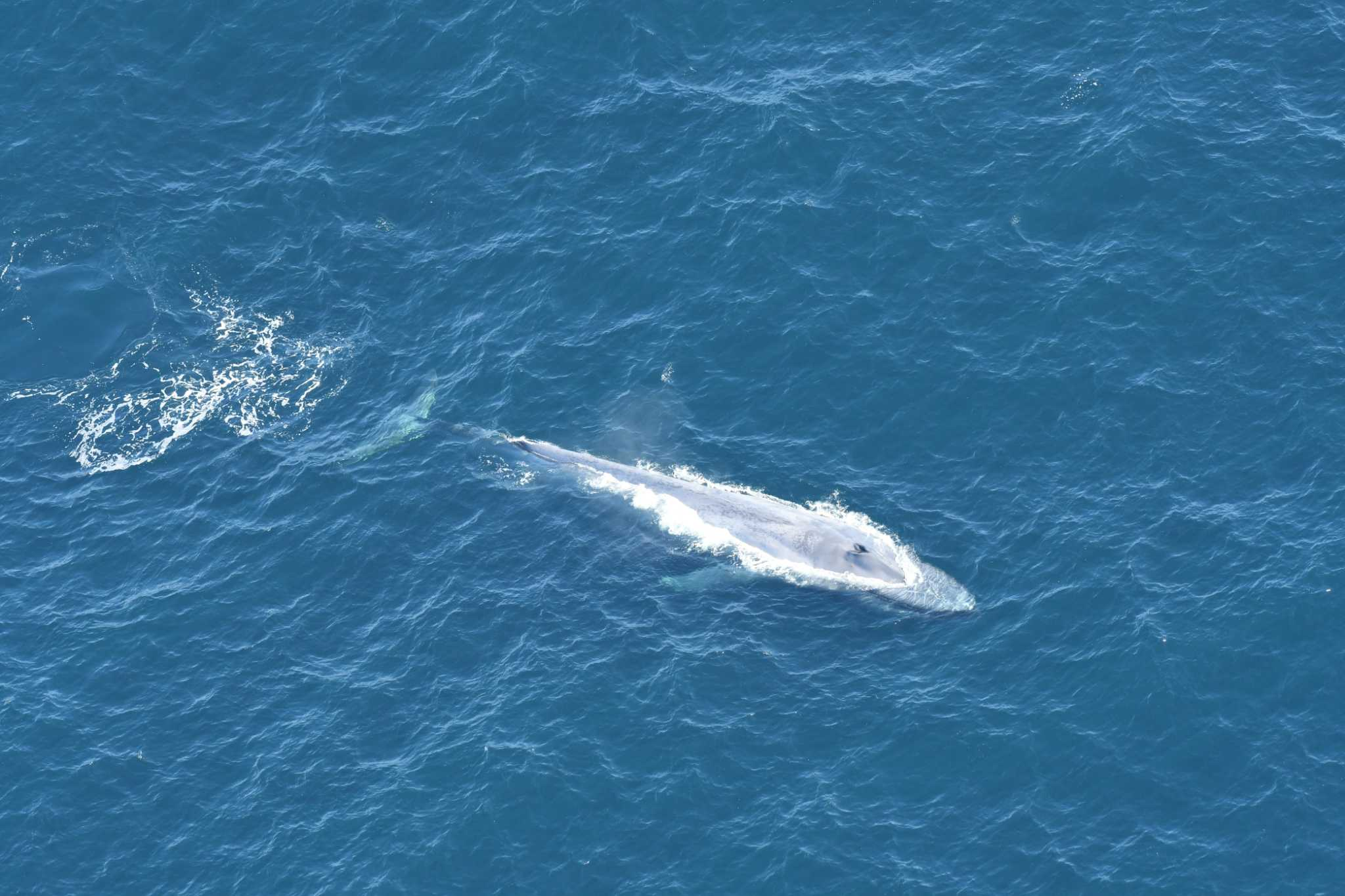 Rare blue whales spotted 130 miles east of Connecticut