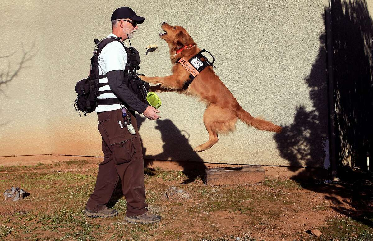 """�Groot� the hero rescue dog alerts his owner and trainer Rich Cassens with jumping and barking after a find during a training exercise in Cool, Ca., on Monday Feb 25, 2020. """"Groot"""" and Rich Cassens were the search and rescue team that found the lost hikers after eight days in the Marin County backcountry."""