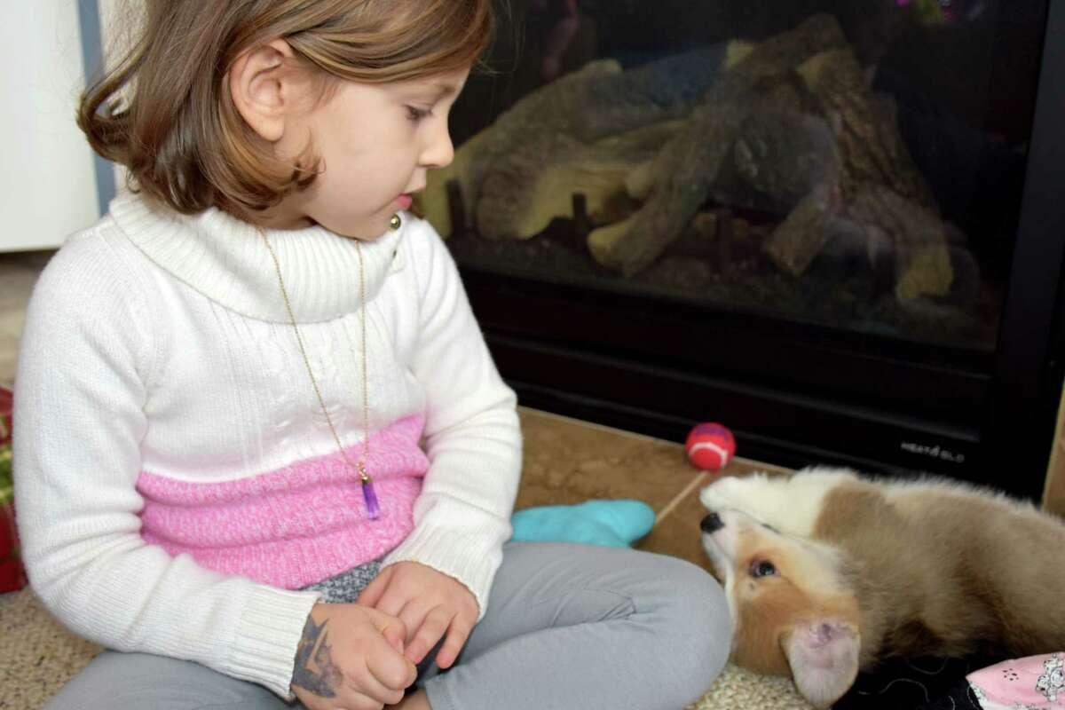 Four-year-old Piper Veino of Latham and her new Corgi pup, Luna, eye one another in a rare moment of rest, says Barbara Veino Roosevelt of Mechanicville. In addition to Luna, Piper lives with Luna, her mom and dad, Melissa and Matt Veino; her two sisters, Zoe and Maddie; and her two cats, Winky and Moe.
