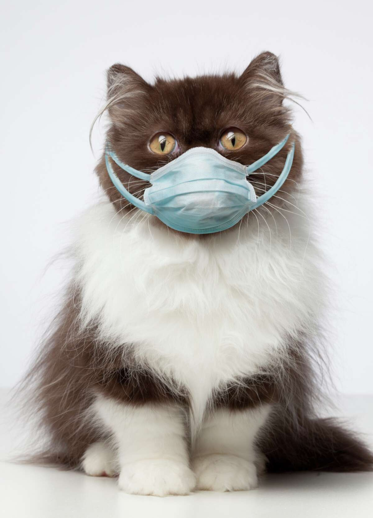Keep cats indoors when possible to prevent them from interacting with other animals or people. Source: CDC