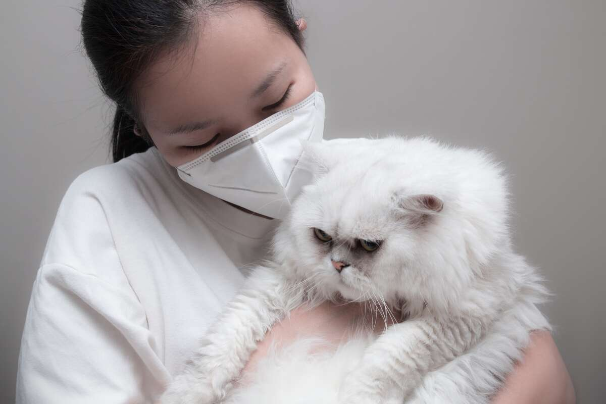 Your pet cat or dog can't infect you with COVID-19.