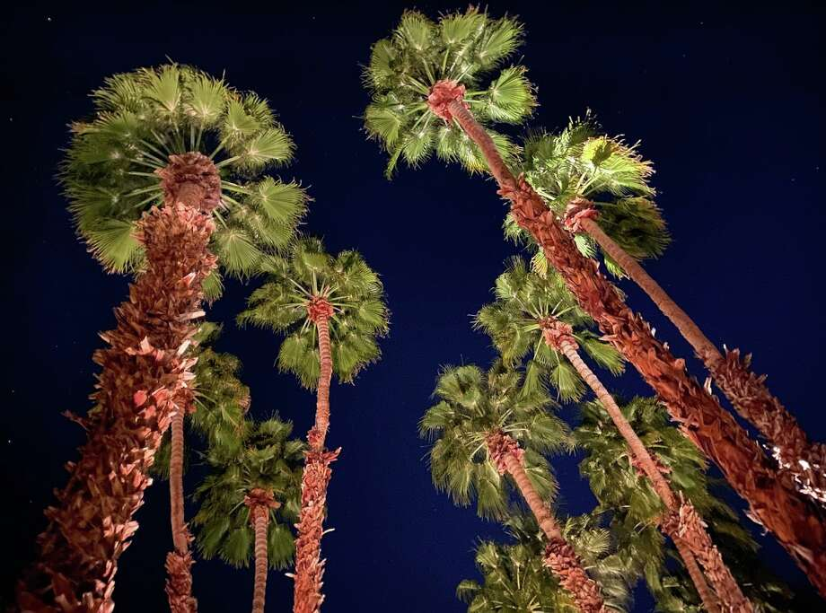 Looking up at palm trees and starry skies at dusk at the La Quinta Resort in La Quinta, Calif. — yes, the town is named after the hotel, just like Beverly Hills is named after the Beverly Hills Hotel. Photo: Chris McGinnis