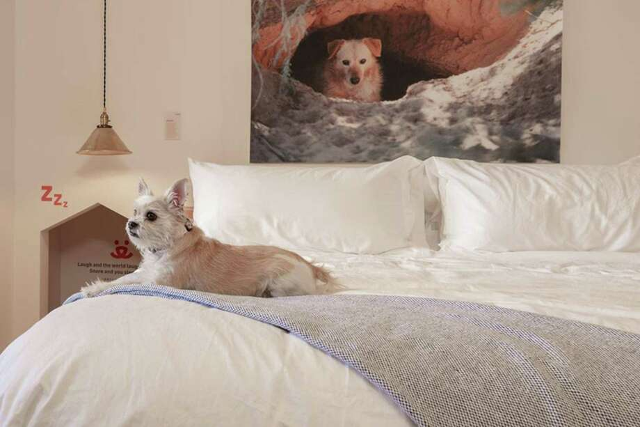 Canines sleep in style at Best Friends Roadhouse and Mercantile. Photo: Best Friends Roadhouse And Merca, HO / TNS / TNS