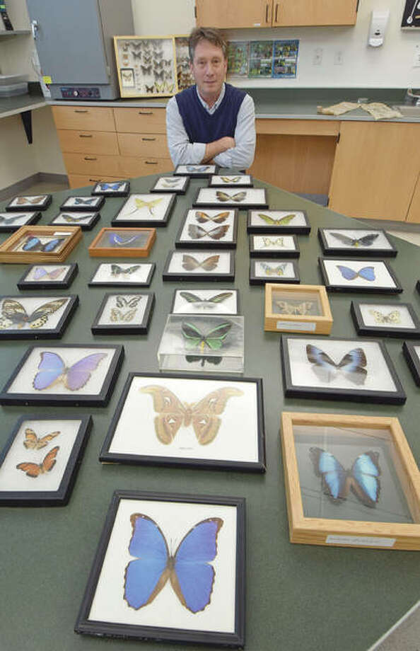 Lawrence Zettler with a small part of Illinois College's butterfly and moth collection, which includes some of the most stunning colors on earth.