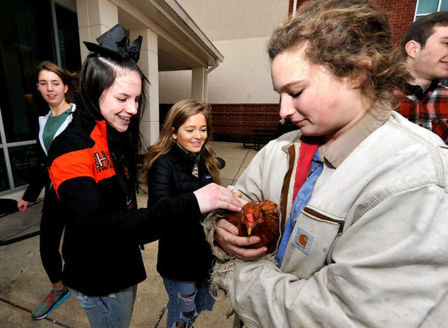 Olivia Szedlar, 15, left, and Bella Pace, 15, center, pet a chicken named Blondie held by Abbie Hedger, 16, during Farm Day at Edwardsville High School, a part of National FFA Week.