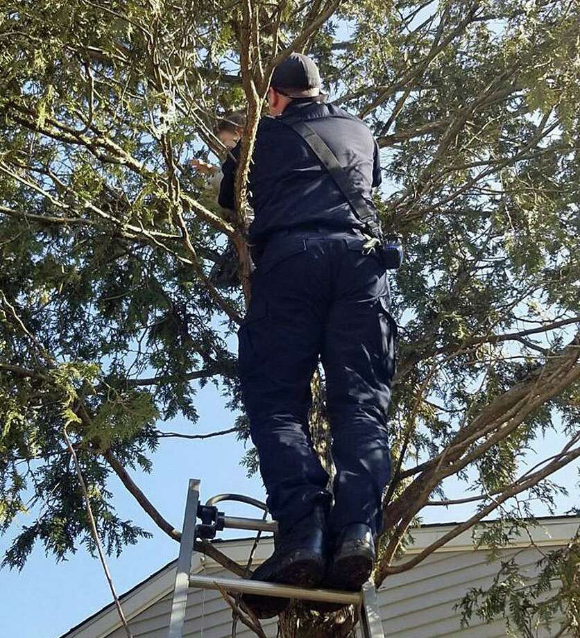 """On Monday, March 2, 2020, Danbury firefighters posted on their Facebook page that a boy climbed a tree 16 feet, """"but couldn't master getting down."""" """"Mom called 911, Engine 23 arrived, and here is Firefighter Nick Nunnally making the rescue. The young lad was no worse for the wear, and we suspect he'll be a Danbury Firefighter one day."""" Photo: Danbury Fire Department Photo"""