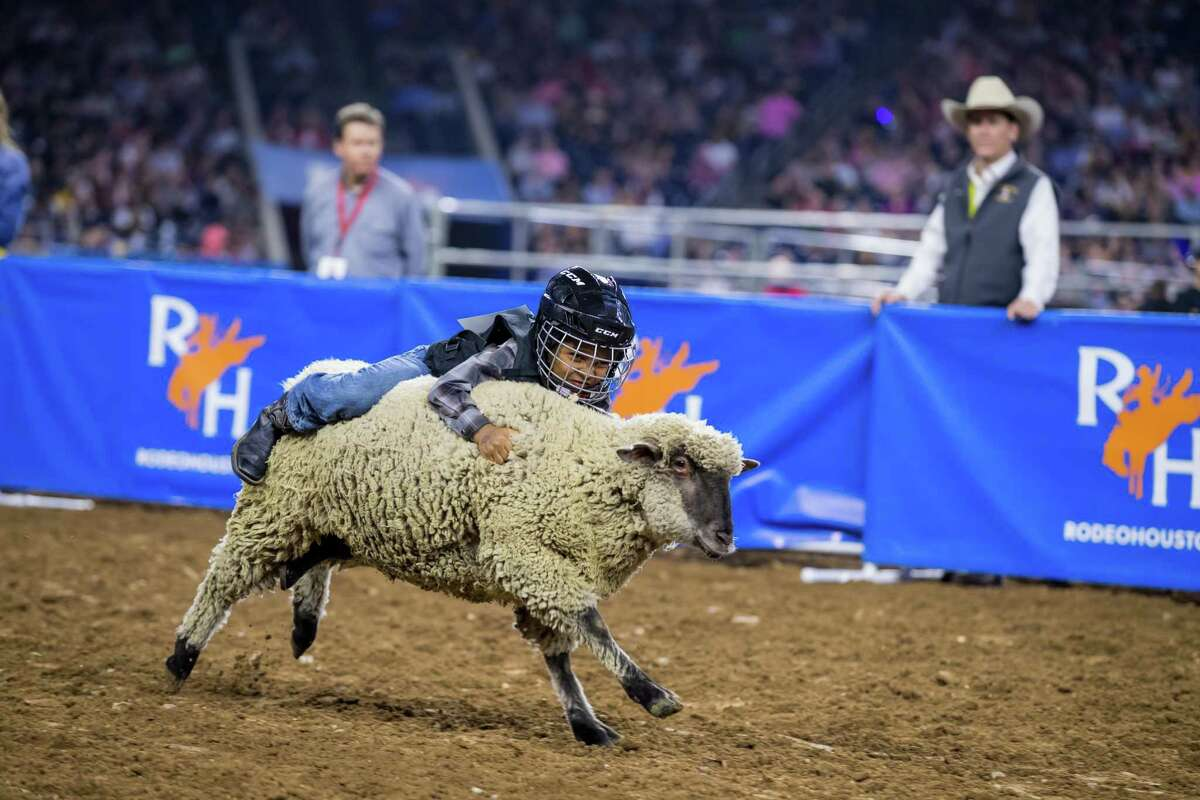 Mutton bustin' puts kids on the back of sheep at RodeoHouston