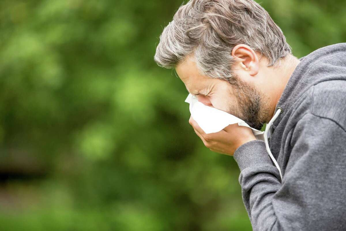 UT Health San Antonio officials recommend individuals who feel sick with mountain cedar allergies stay home during the holidays.