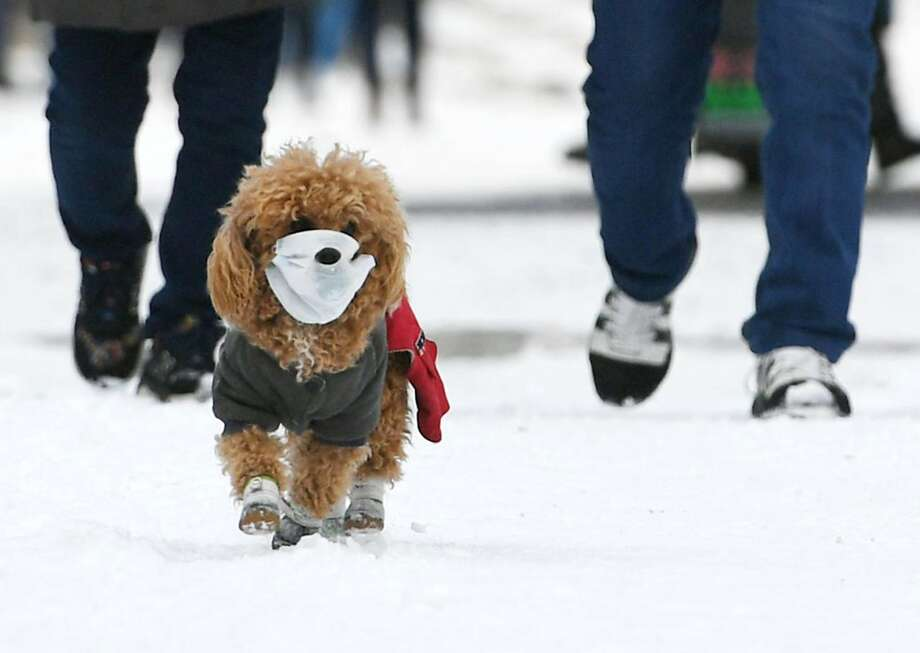 CDC Guidelines for pets and coronavirus Do not let pets interact with people or other animals outside the household. Source: CDC Photo: Photo By Zhang Yao/China News Service Via Getty Images, Visual China Group Via Getty Ima