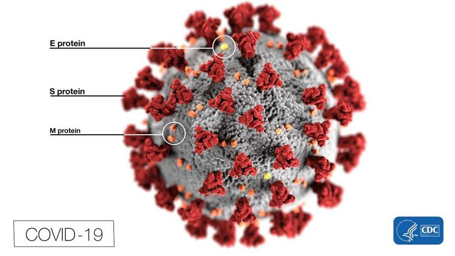 A new puzzle is helping University of Washington researchers design antiviral proteins against coronavirus. Photo: Centers For Disease Control And Prevention