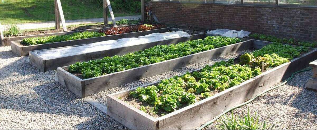The Wilton High School Organic Garden will hold a pre-order native plant sale through April 24.