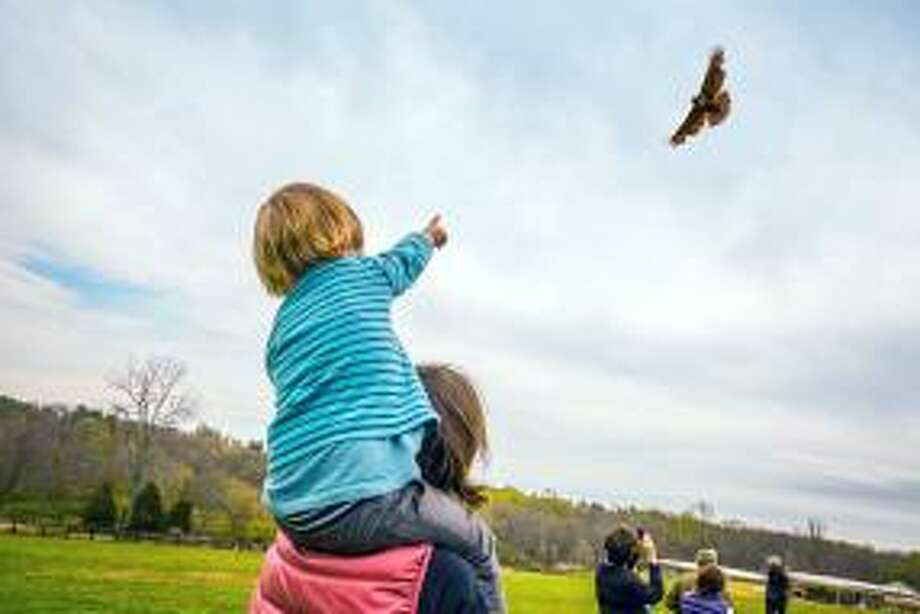 This editorial raises the awareness needed to promote the preservation, and conservation of our planet not just on one single day, Earth Day, New Canaan, but on all of our days. Photo: Vanessa Van Ryzin / Grace Farms Foundation / Contributed Photo
