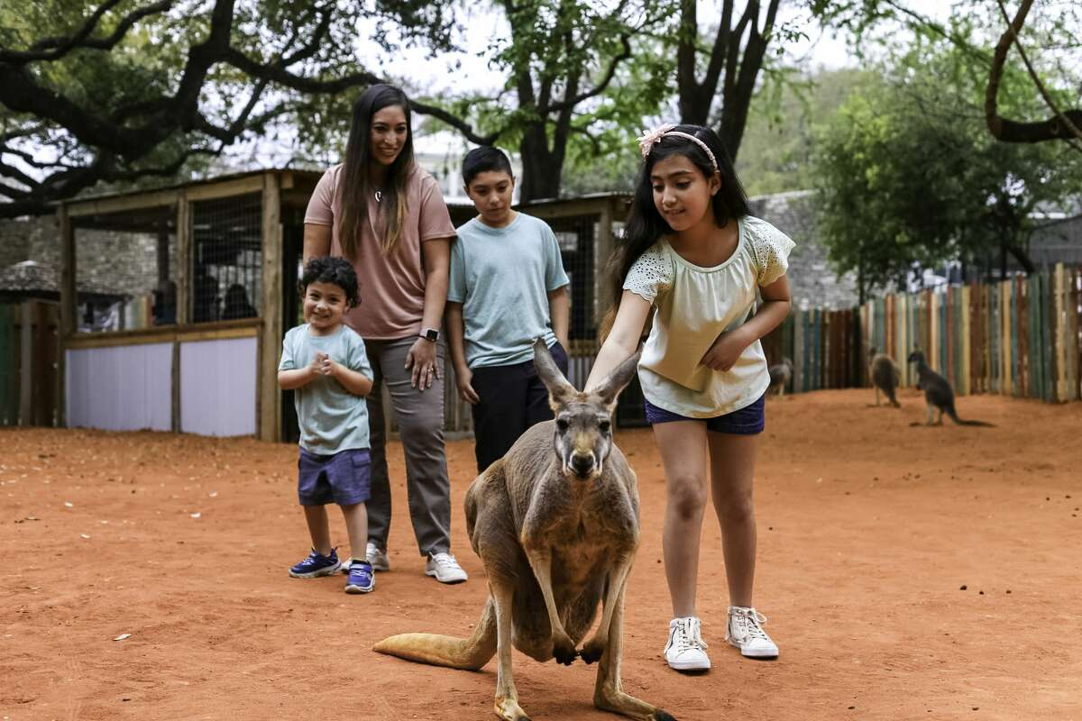 San Antonio Zoo  There are plenty of new adventures to embark on and amenities to take advantage of at the zoo this spring break, starting with the just-opened Kangaroo Krossing. The new interactive experience houses the red kangaroos. The zoo offers an