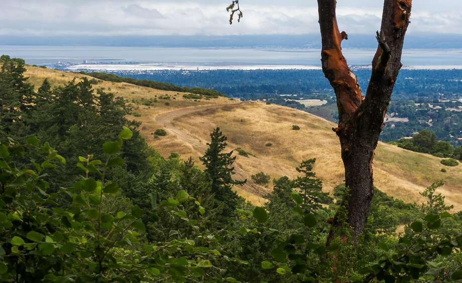 View looking across the South Bay on the descent from Windy Hill Peak down on Hamms Gulch Trail at Windy Hill Open Space Preserve. Photo: Karl Gohl / Karl Gohl