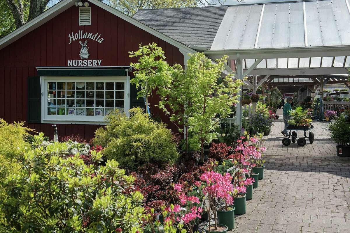 Bethel-based Hollandia Nurseries, founded more than 55 years ago by the Reelick family, offers a wide variety of flowering trees, plants, and shrubs.