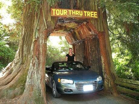 No. 4, Klamath Tour Thru Tree